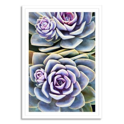 So Succulent Extra-Large Framed Print Wall Art