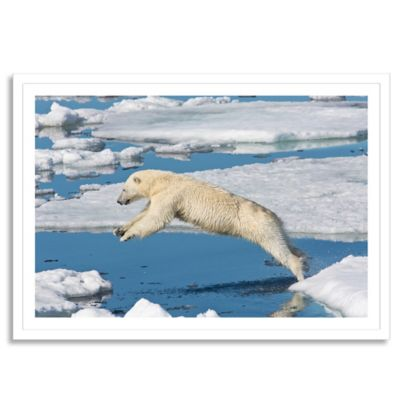 Polar Bear on Ice Pack High Arctic Medium Photographic Wall Art