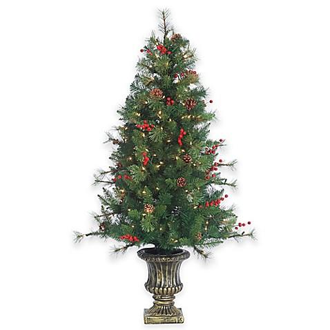 Buy 4.5-Foot Pre-Lit Potted Alberta Spruce Christmas Tree ...