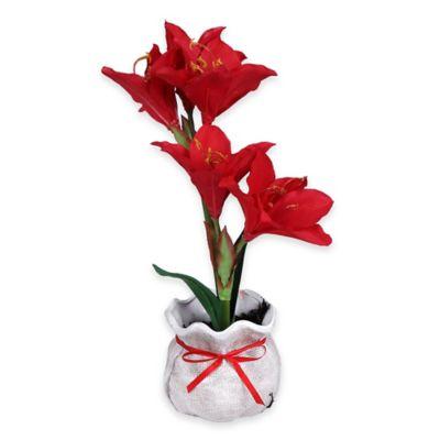 Red Floral Amaryllis Plant in Ceramic Pot