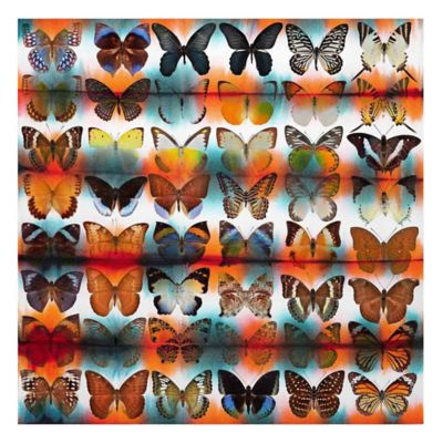 Parvez Taj Butterflies 48-Inch x 48-Inch Canvas Wall Art