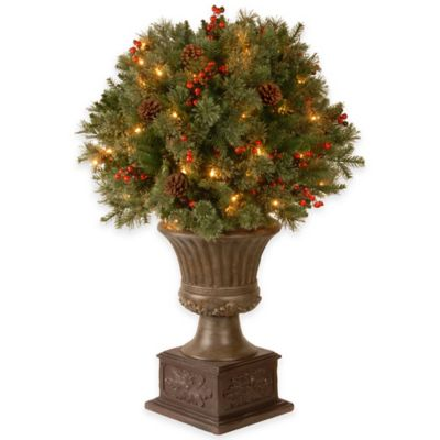 National Tree 36-Inch Gladstone Pine Topiary Bush with Clear Lights