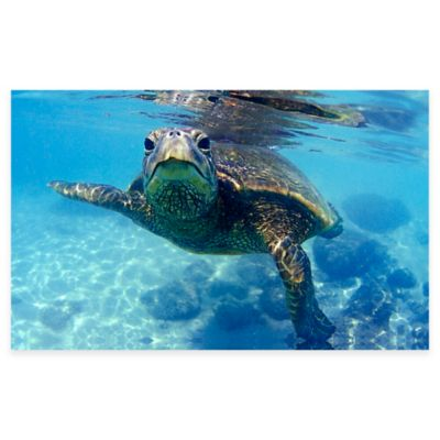 Friendly Turtle Canvas Wall Art