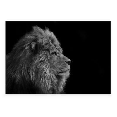 Male Lion Close Up 24-Inch x 16-Inch Metal Wall Art