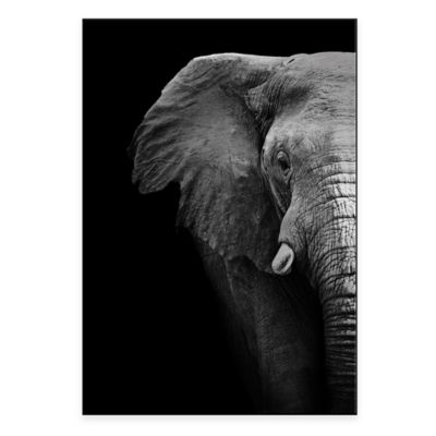 Elephant Close Up 22-Inch x 32-Inch Metal Wall Art