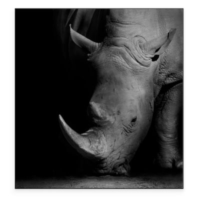 Rhino 22-Inch x 24-Inch Metal Wall Art