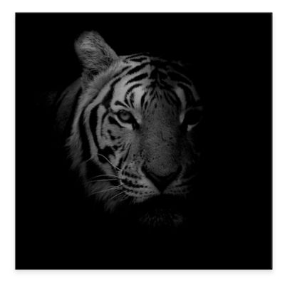 Tiger 24-Inch x 24-Inch Metal Wall Art