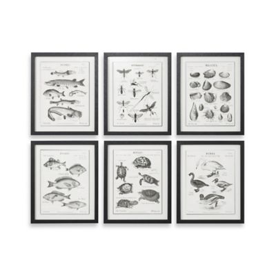 Uttermost Science Studies Vintage Wall Art (Set of 6)