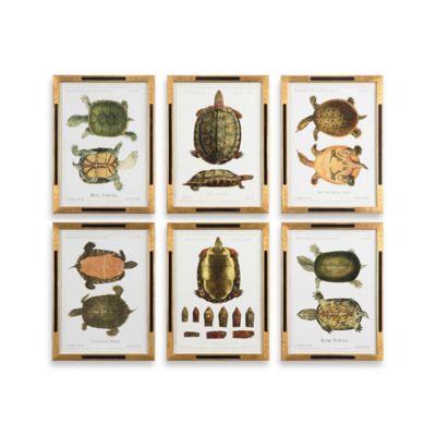 Tortoise Study Framed 6-Piece Wall Art