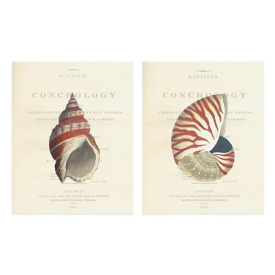 Conchology Buccinum/Nautilus 16-Inch x 20-Inch Embellished Canvas Wall Art (Set of 2)