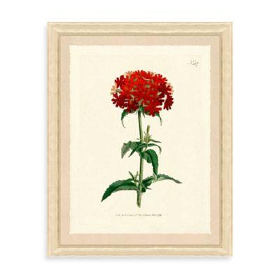 Red Botanicals Framed Giclée Print Wall Art I