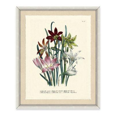 Botanical Grouping Framed Giclée Print Wall Art II