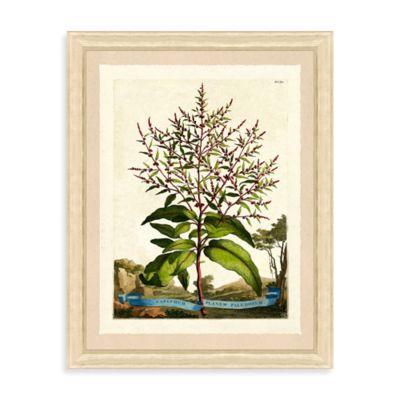 Framed Vintage Botanical Giclee Print III Wall Art