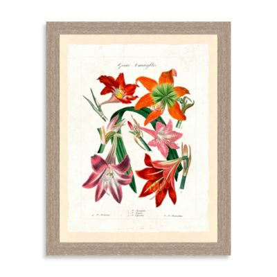 Botanical Study Framed Giclée Print Wall Art III