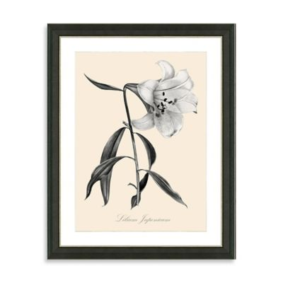 Framed Yellow and White Botanical Giclee Print IV Wall Art