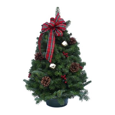Highland 18-Inch Tabletop Fresh Christmas Tree