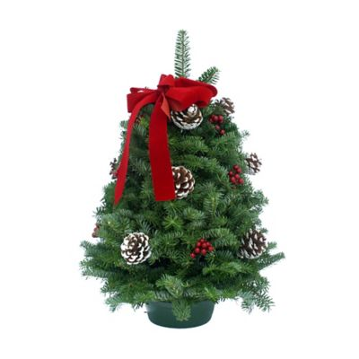 Classic 18-Inch Tabletop Fresh Christmas Tree