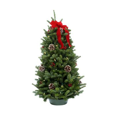 Classic 28-Inch Pre-Lit Tabletop Fresh Christmas Tree