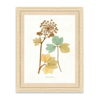 Framed Giclee Nature Print Wall Art II