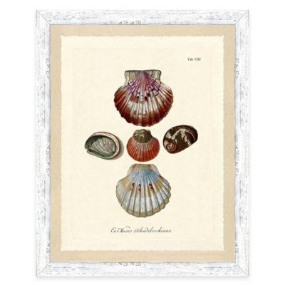 Sea Shell Study Print II Giclée Framed Wall Art