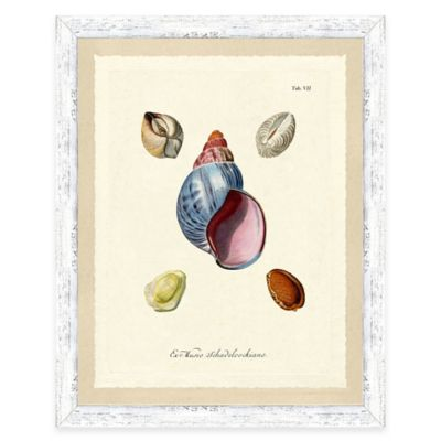 Sea Shell Study Print III Giclée Framed Wall Art