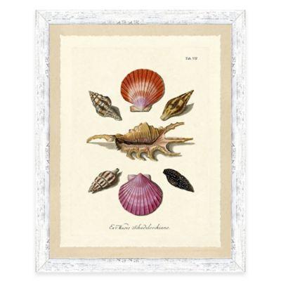 Sea Shell Study Print IV Giclée Framed Wall Art