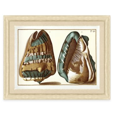 Teal Shell Print I Giclée Framed Wall Art