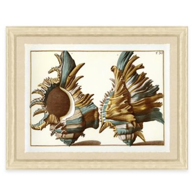 Teal Shell Print II Giclée Framed Wall Art