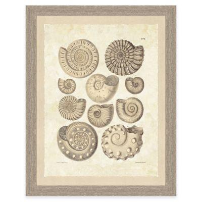 Framed Giclee Brown Shell Print Wall Art I