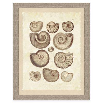 Framed Giclee Brown Shell Print Wall Art II
