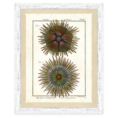 Framed Giclee Sea Urchin Print Wall Art