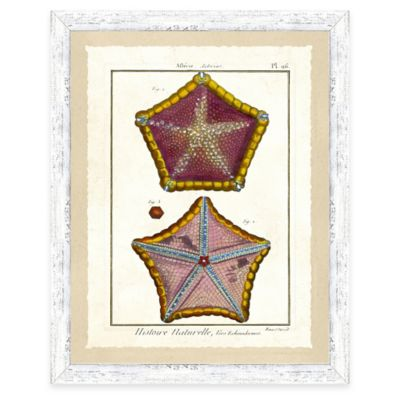 Framed Giclee Starfish Print Wall Art