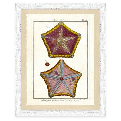 Framed Giclee Starfish Print Wall Art