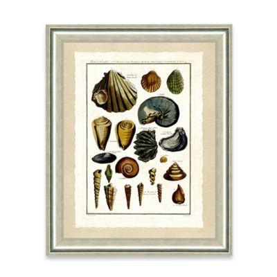 Natural Shell Framed Giclée Print Wall Art II