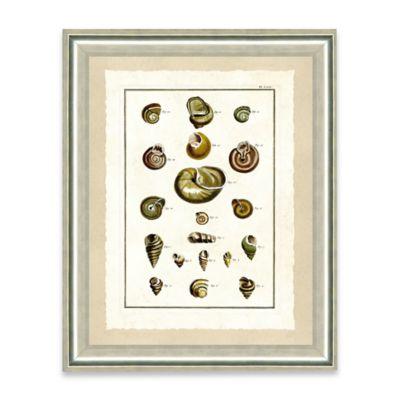 Natural Shell Framed Giclée Print Wall Art III