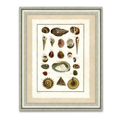Natural Shell Framed Giclée Print Wall Art IV