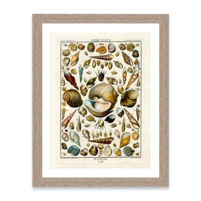 Framed Giclée Shell Collage Print I Wall Art