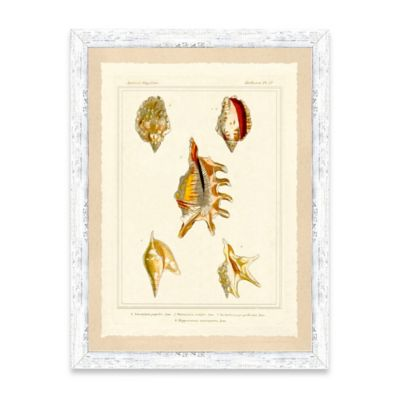 Golden Shell Framed Giclée Print Wall Art I