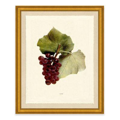 Grape II Framed Art Print