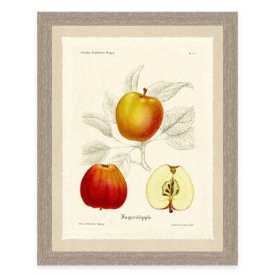 Apple Sketch Framed Art Print