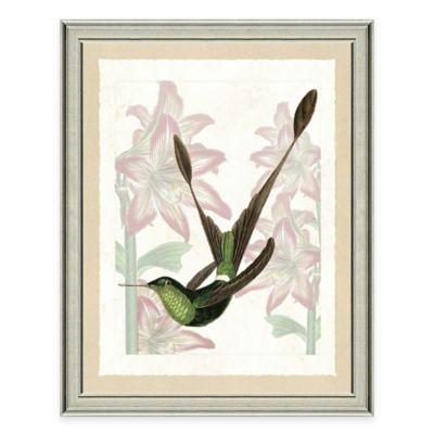 Hummingbird II Framed Art Print