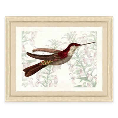 Hummingbird III Framed Art Print