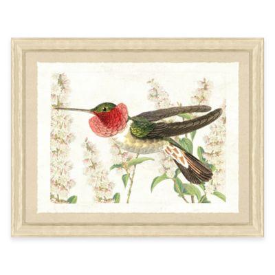 Hummingbird IV Framed Art Print