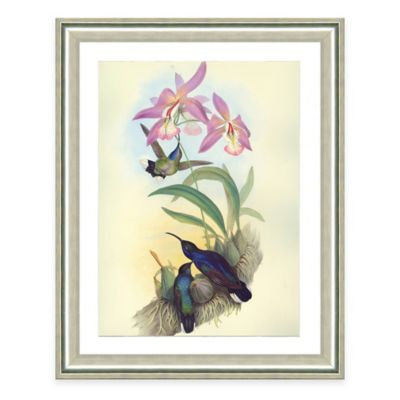 Hummingbird Scene I Framed Art Print
