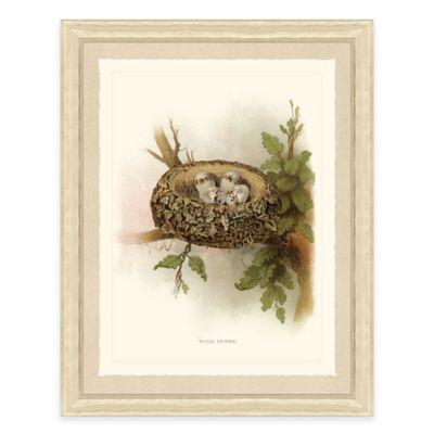 Nest and Eggs I Framed Art Print