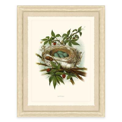 Nest and Eggs II Framed Art Print