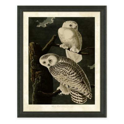 Audubon Snow Owl Framed Art Print