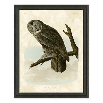 Audubon Owl Framed Art Print