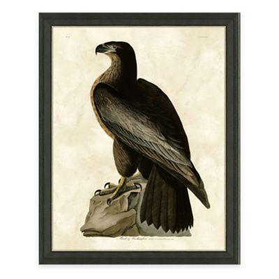 Audubon Hawk Framed Art Print