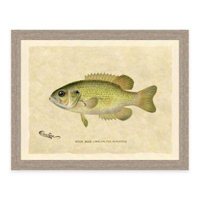 Rock Bass Framed Art Print